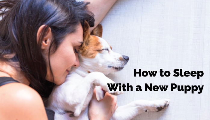5-How-to-Sleep-With-a-New-Puppy