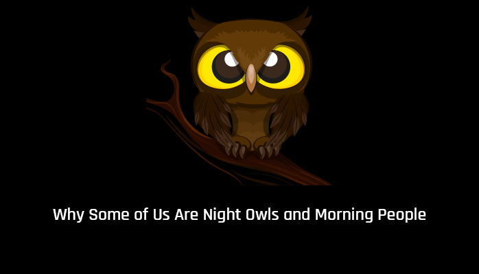 Why some of us are night owls and morning people